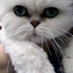 Cat After Groom