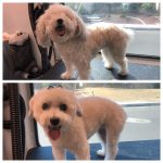 Dog Before & After Groom