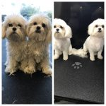Dogs Before & After Groom