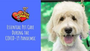 Essential Pet Care During the COVID-19 Pandemic