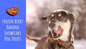 Frozen Berry Banana Snowflake Dog Treats