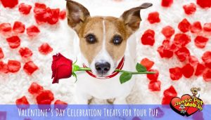 Valentine's Day Celebration Treats for Your Pup Feb 2021